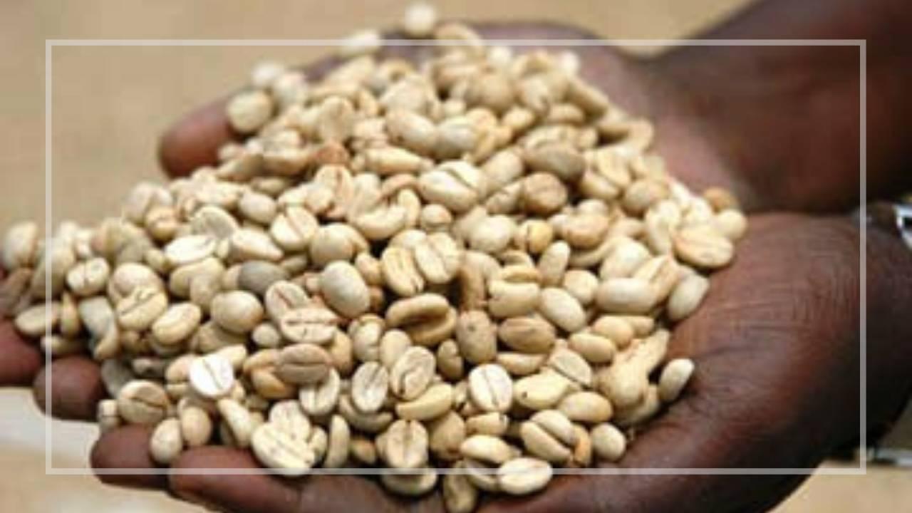 ウガンダ産オーガニックコーヒー豆