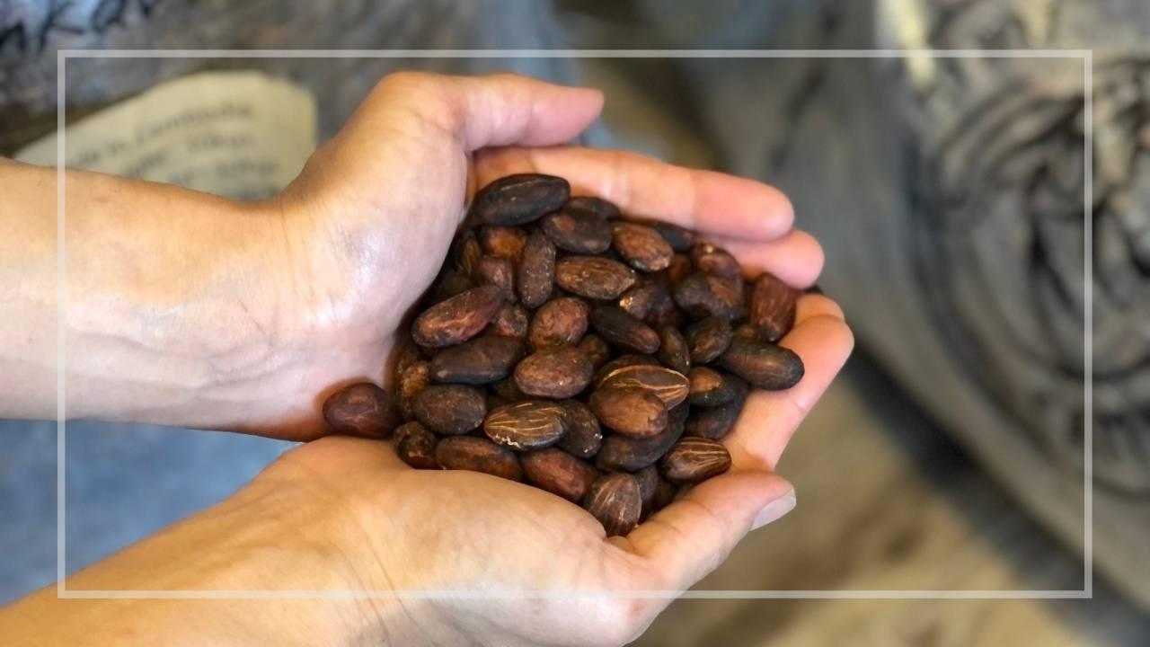 カンボジア産オーガニックカカオ豆